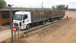 Transportar ganado en camiones ganaderos