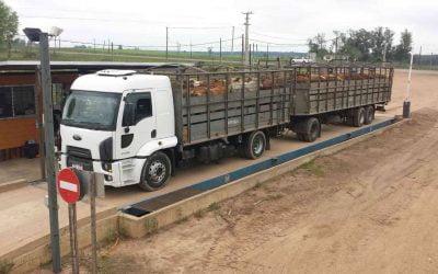 Exigencias para los Camiones ganaderos
